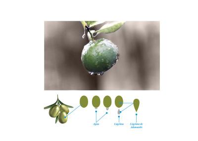 Diseño de producto Adamantis Aceite de Oliva para AgroPromex por MODO3